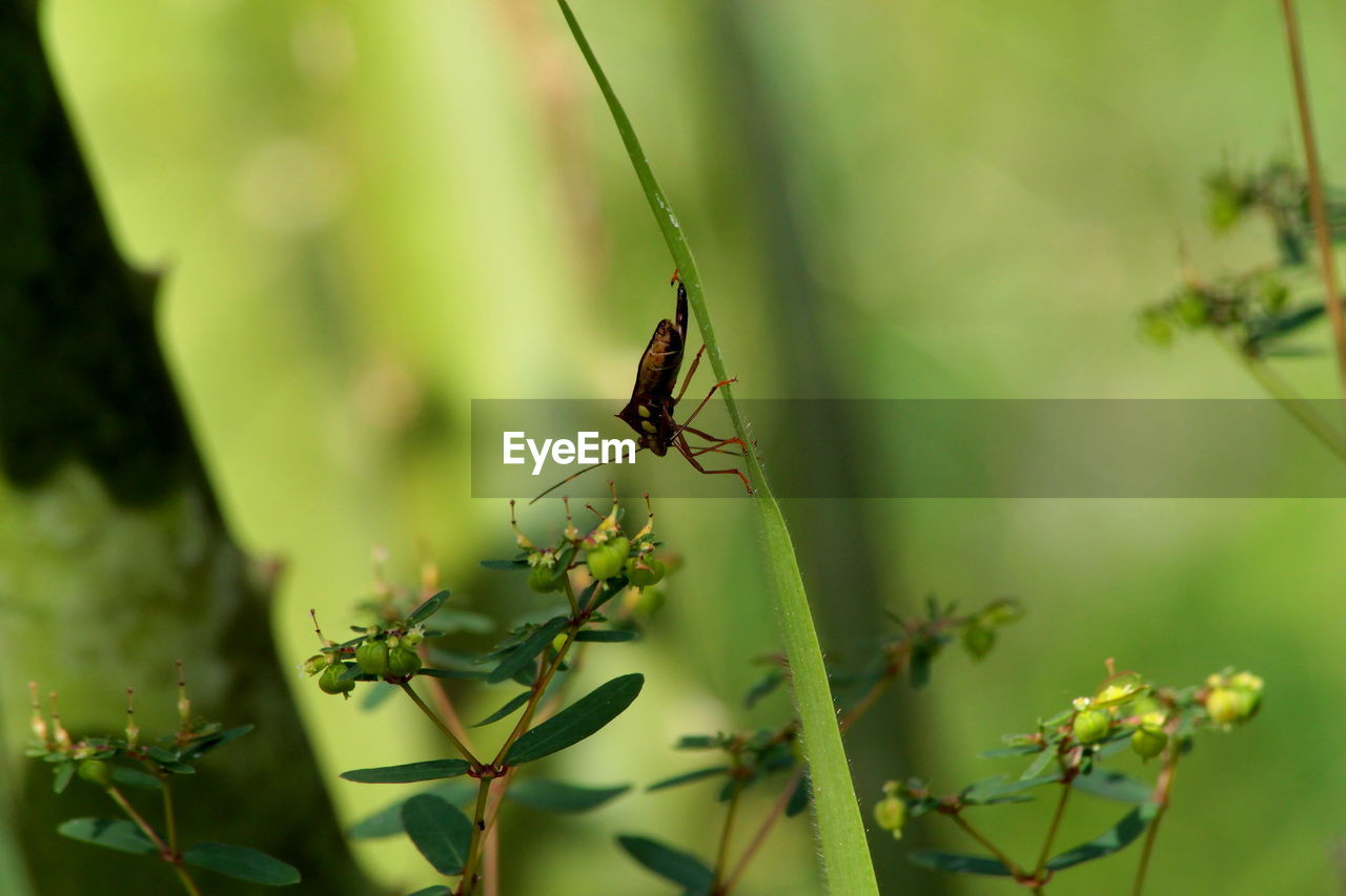 one animal, insect, animal themes, animals in the wild, plant, nature, growth, no people, day, green color, animal wildlife, focus on foreground, outdoors, leaf, close-up, beauty in nature
