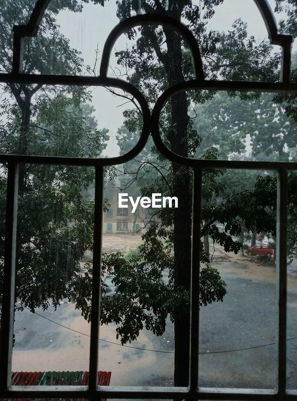 tree, day, window, basketball hoop, no people, growth, outdoors, sky, built structure, nature, architecture, court