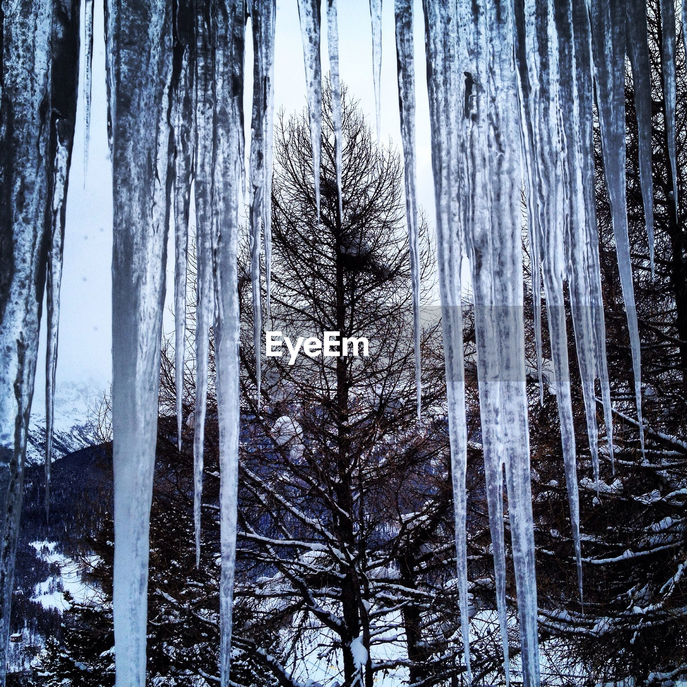 Low angle view of icicles against bare tree during winter