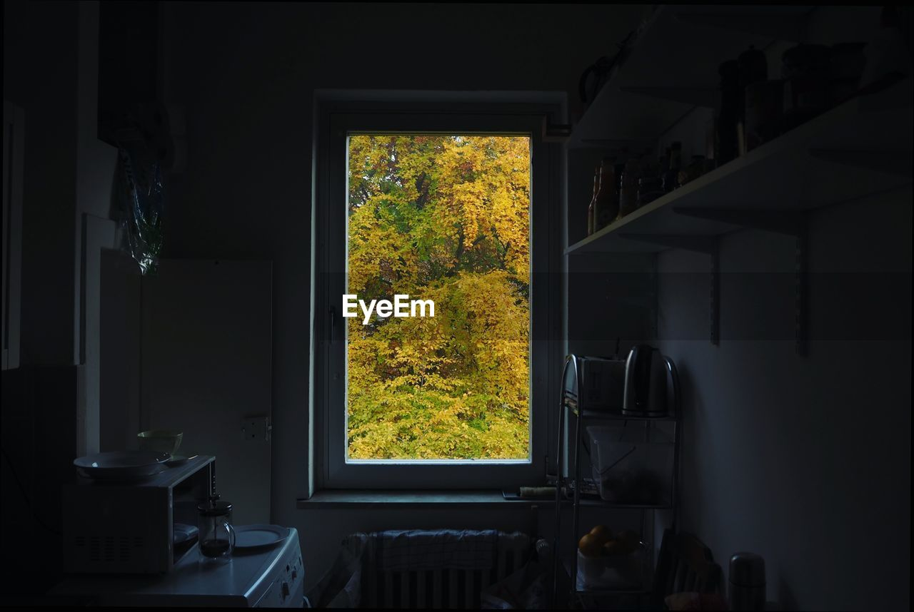 window, indoors, no people, plant, domestic room, nature, home interior, tree, glass - material, absence, transparent, architecture, day, autumn, building, table, change, house, furniture