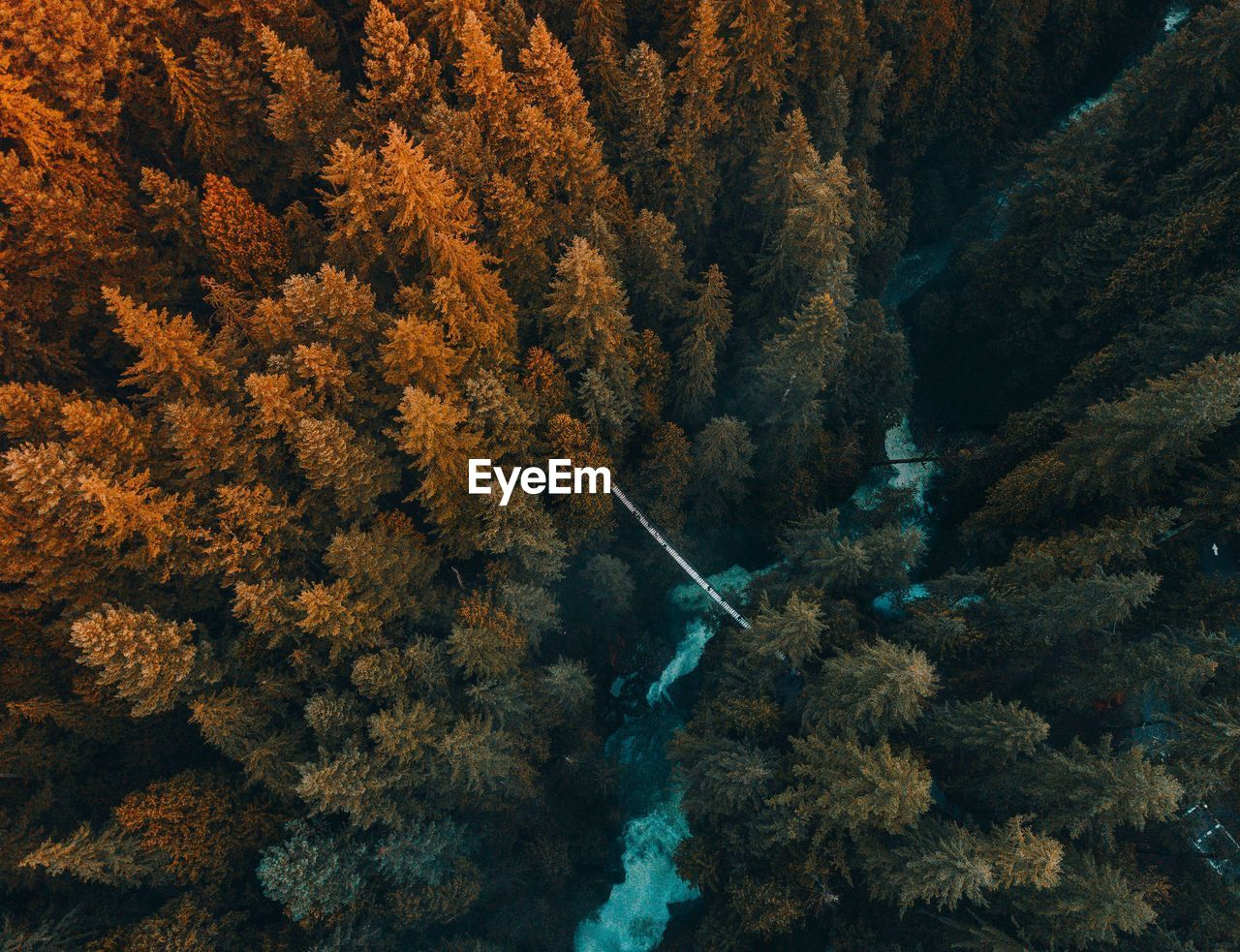 Aerial View Of Trees Growing In Forest