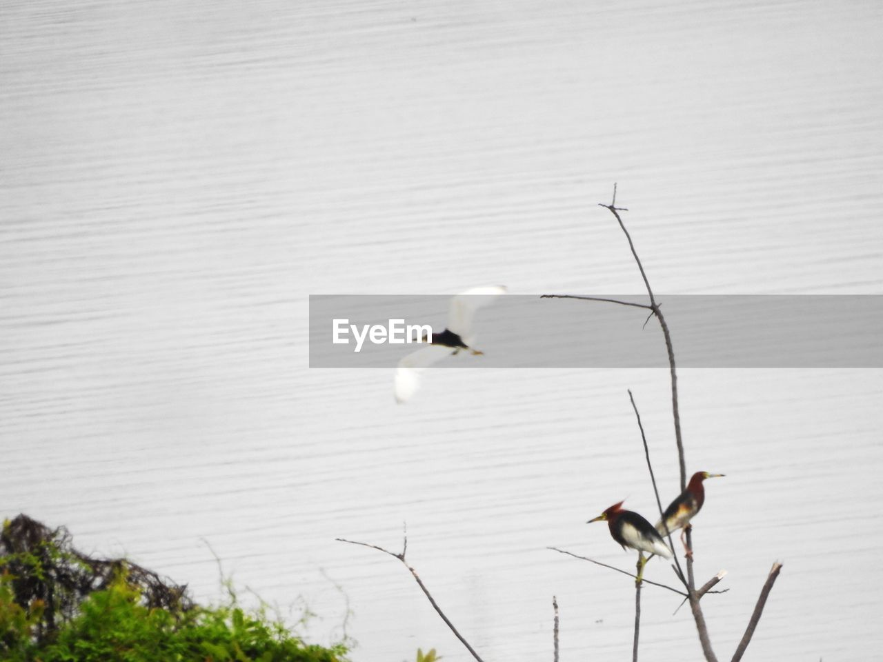 nature, white color, animal themes, animals in the wild, day, lake, no people, outdoors, animal wildlife, plant, bird, beauty in nature, water, perching, close-up