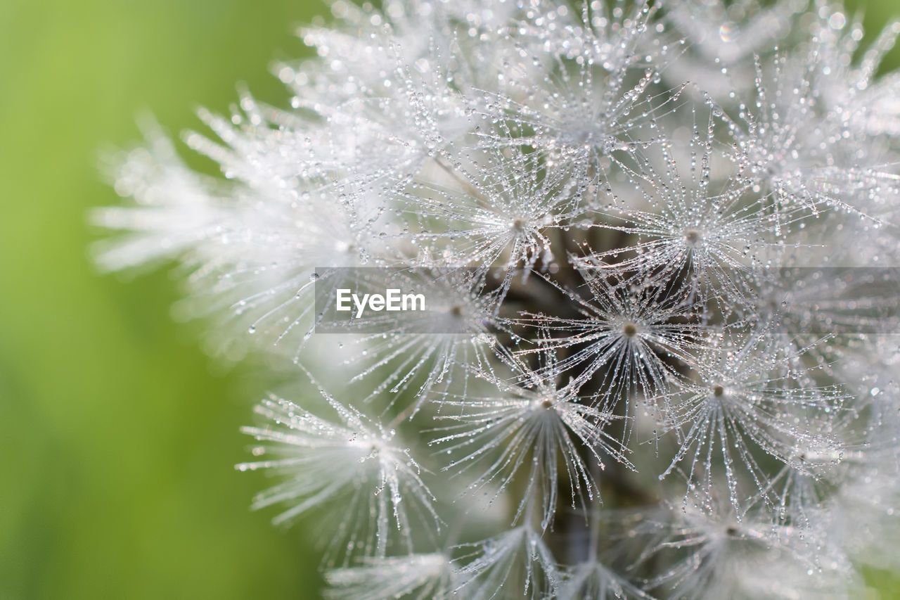 close-up, fragility, nature, focus on foreground, no people, growth, freshness, day, beauty in nature, outdoors, flower