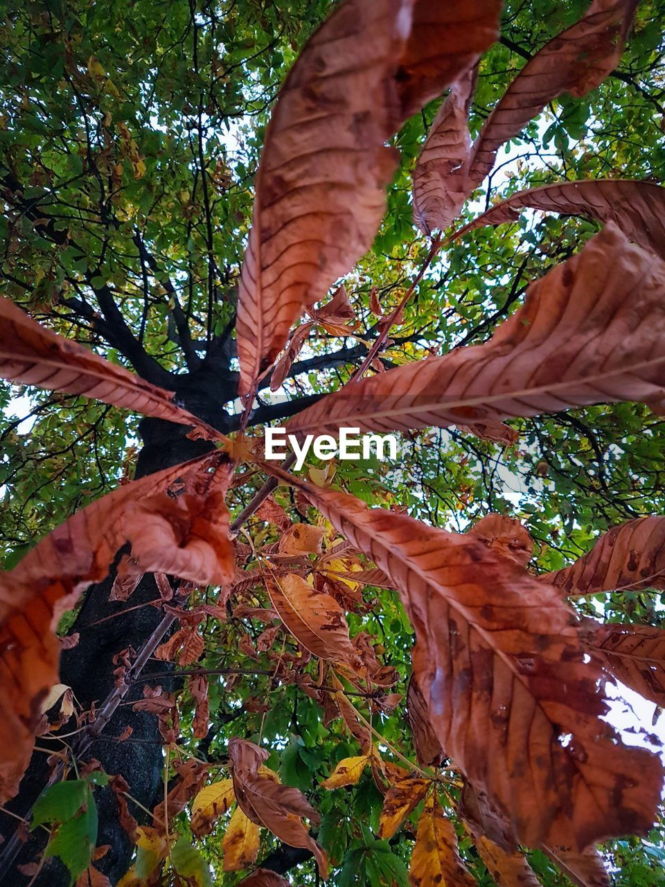 tree, nature, growth, leaf, day, outdoors, tree trunk, no people, low angle view, autumn, beauty in nature, branch, close-up