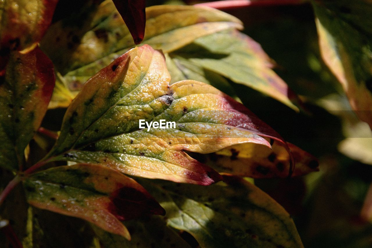 leaf, no people, growth, nature, close-up, day, autumn, outdoors, beauty in nature