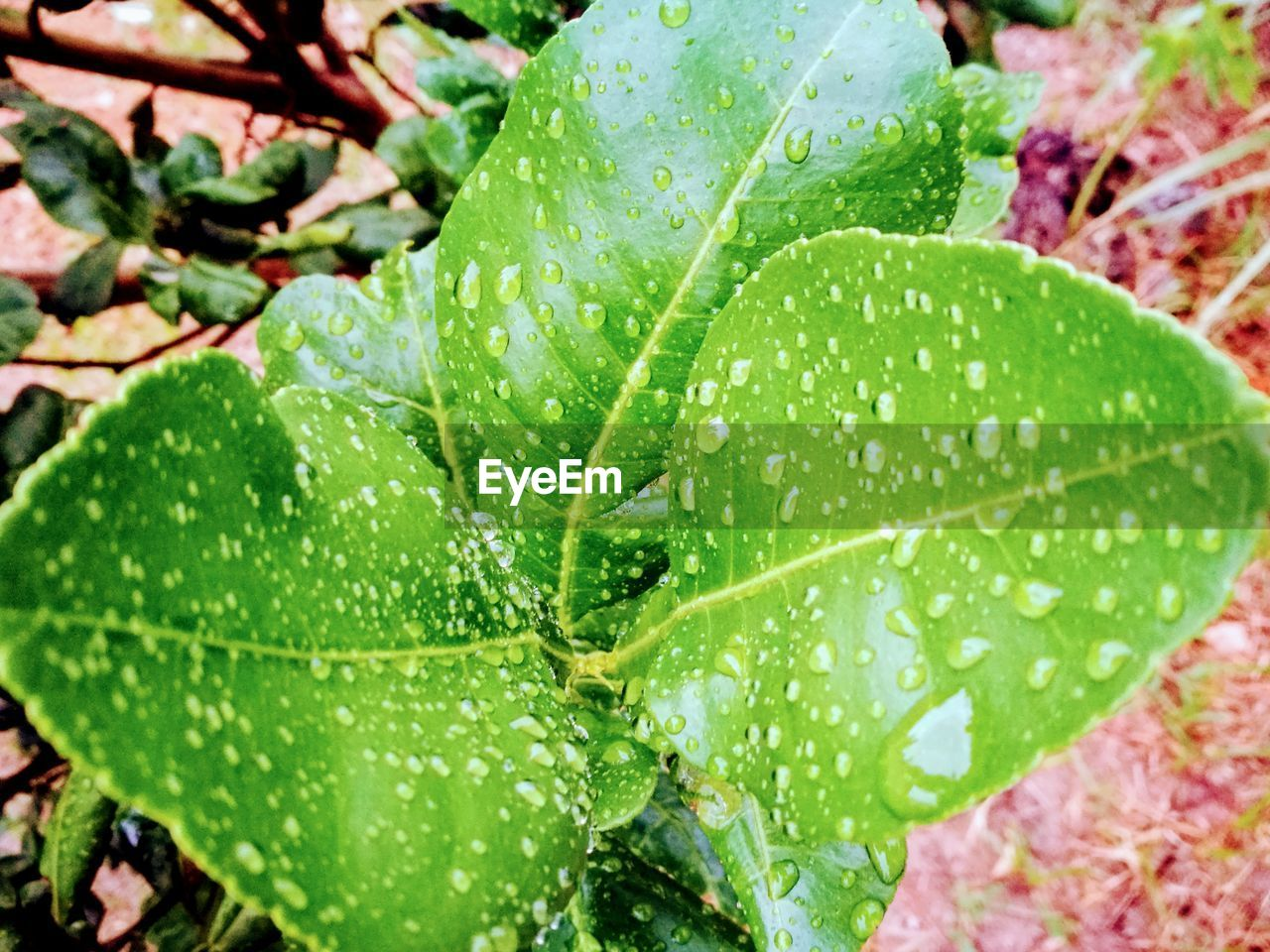 leaf, green color, drop, nature, close-up, plant, freshness, growth, water, no people, day, outdoors, raindrop, beauty in nature