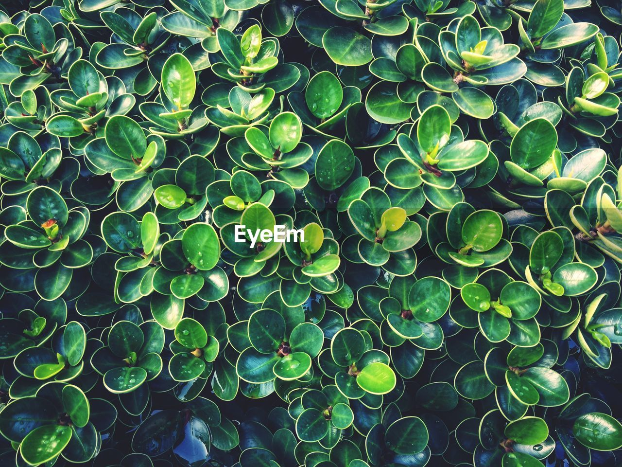 HIGH ANGLE VIEW OF SUCCULENT PLANT