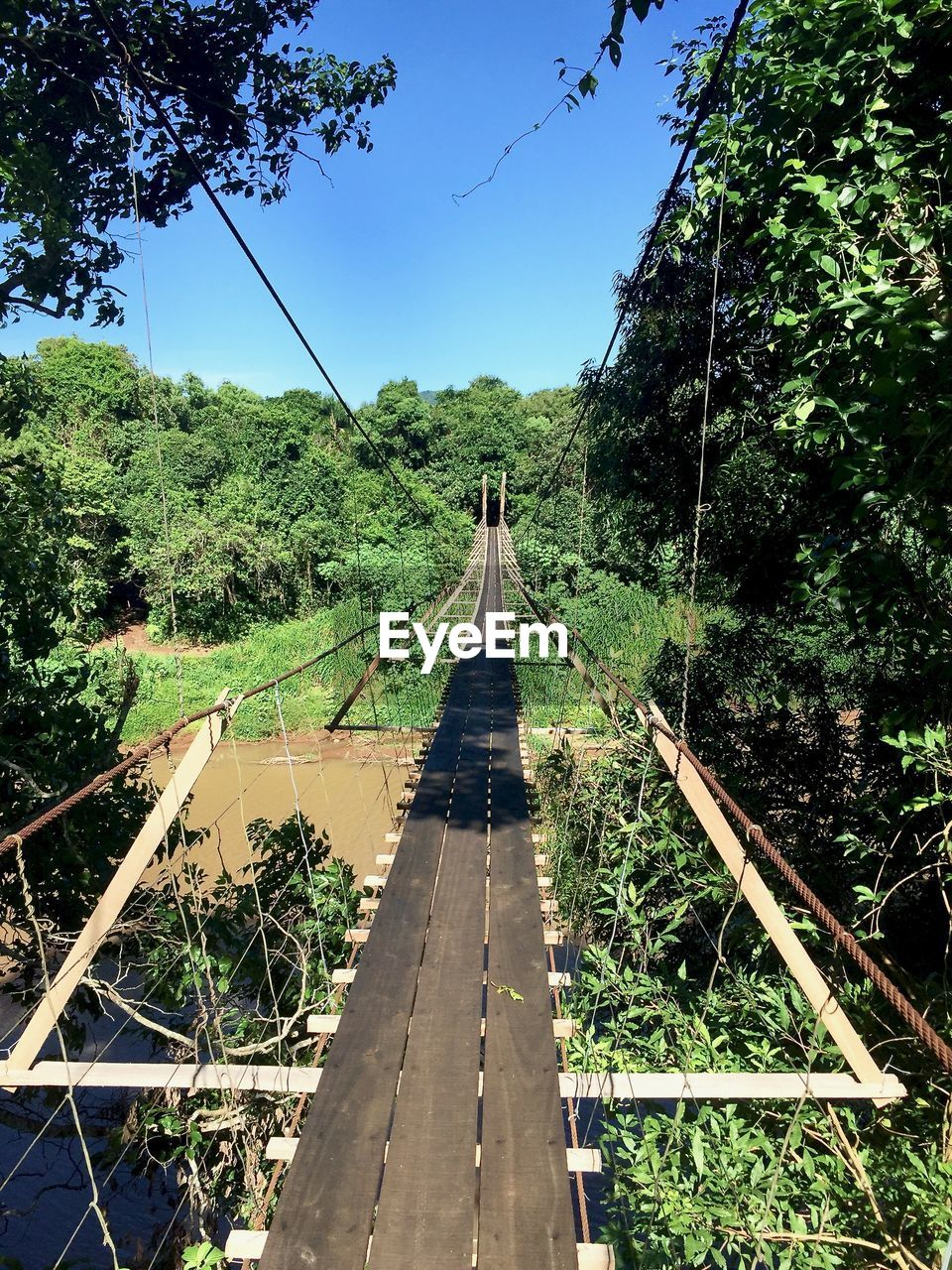 plant, tree, direction, the way forward, nature, connection, transportation, day, bridge, diminishing perspective, growth, land, green color, forest, sky, bridge - man made structure, built structure, rope, architecture, rope bridge, footbridge, outdoors, no people, track