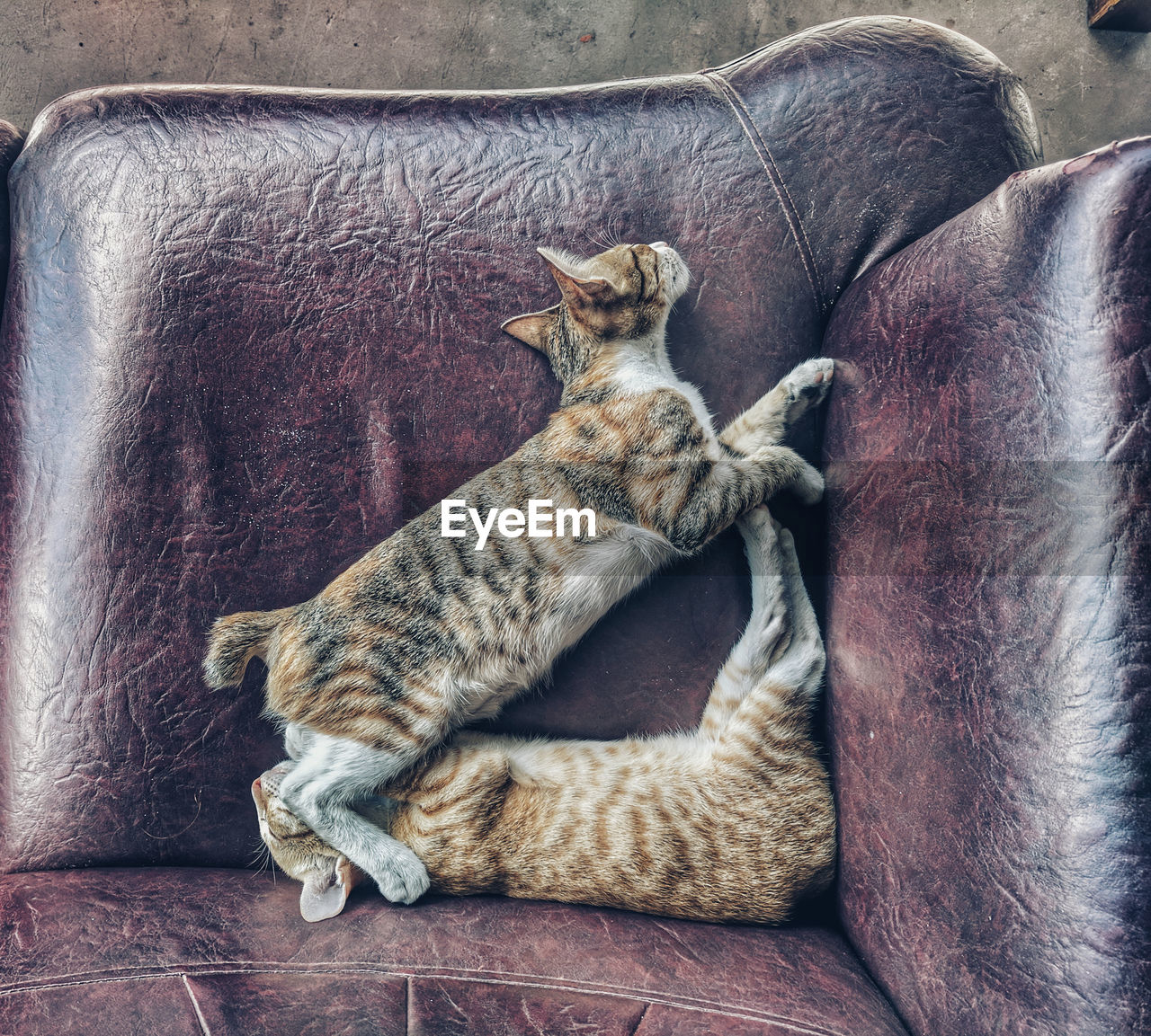 mammal, cat, animal themes, animal, feline, domestic animals, domestic cat, domestic, pets, vertebrate, relaxation, one animal, indoors, no people, sleeping, high angle view, resting, furniture, whisker, tabby, animal family