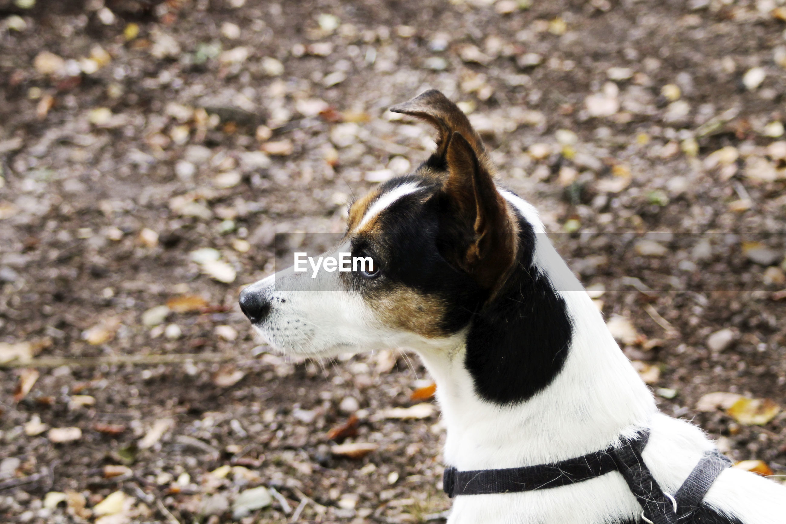 HIGH ANGLE VIEW OF DOG LOOKING AWAY ON FIELD