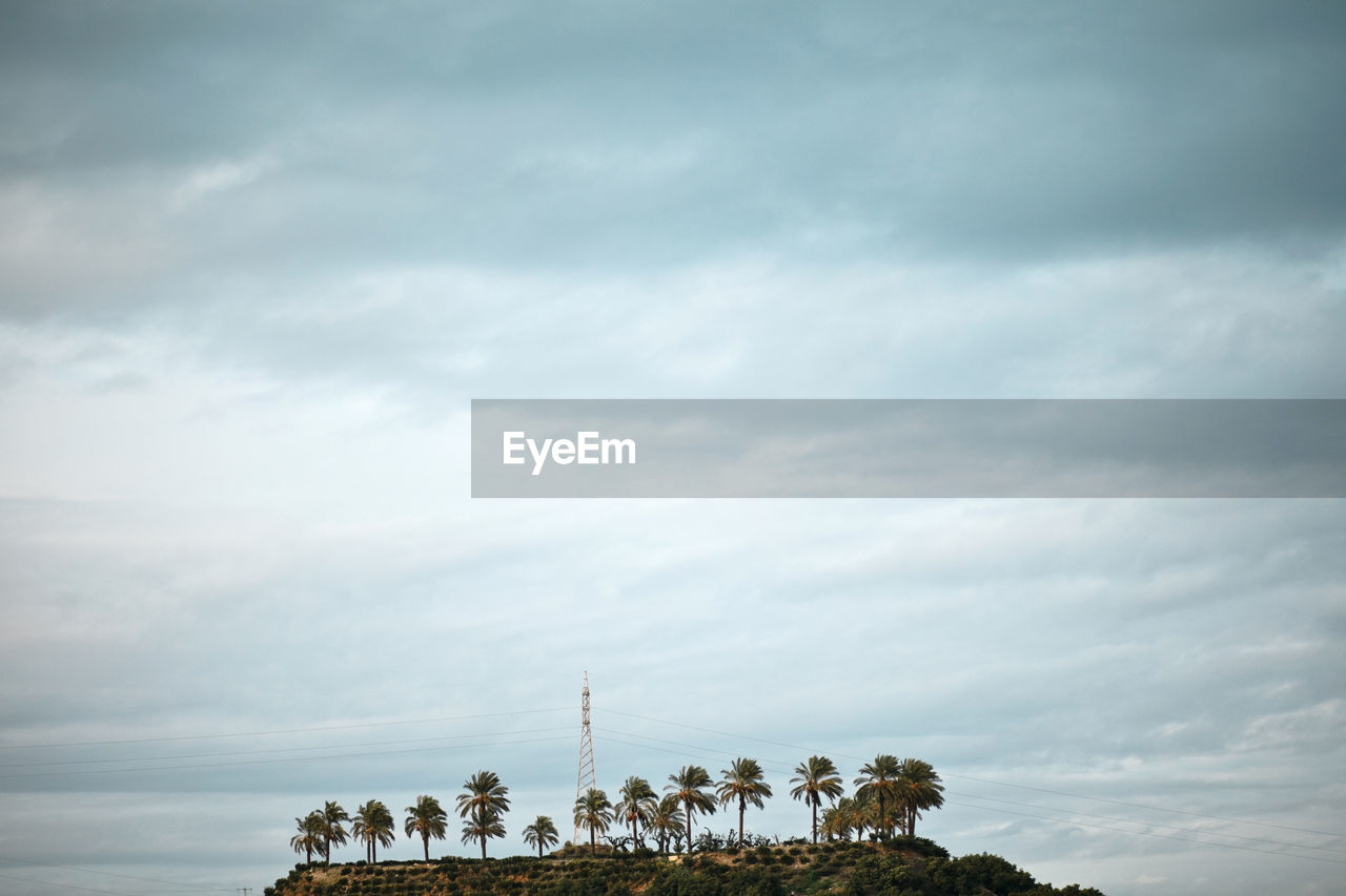 Low angle view of palm trees on hill against cloudy sky