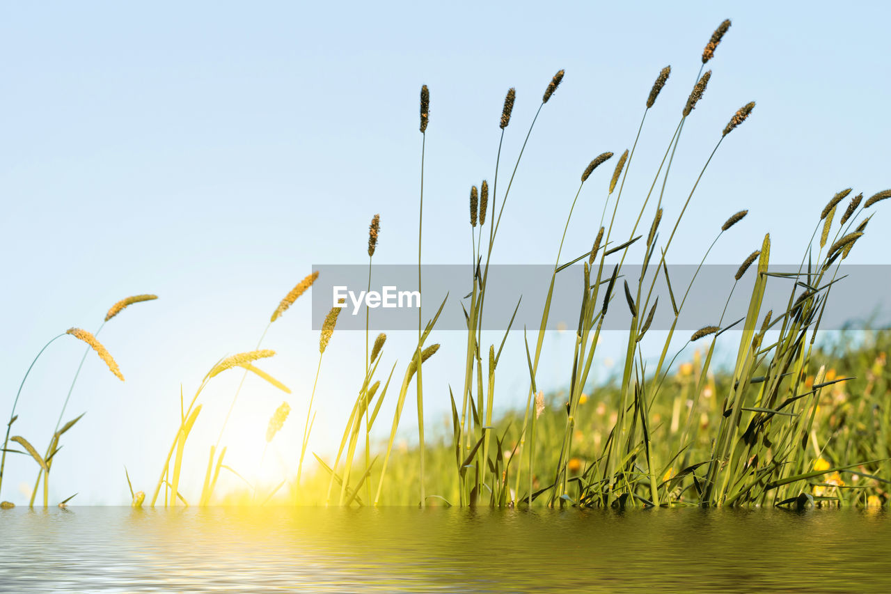 sky, growth, plant, beauty in nature, nature, tranquility, no people, day, water, focus on foreground, clear sky, tranquil scene, land, outdoors, green color, sunlight, grass, scenics - nature, close-up