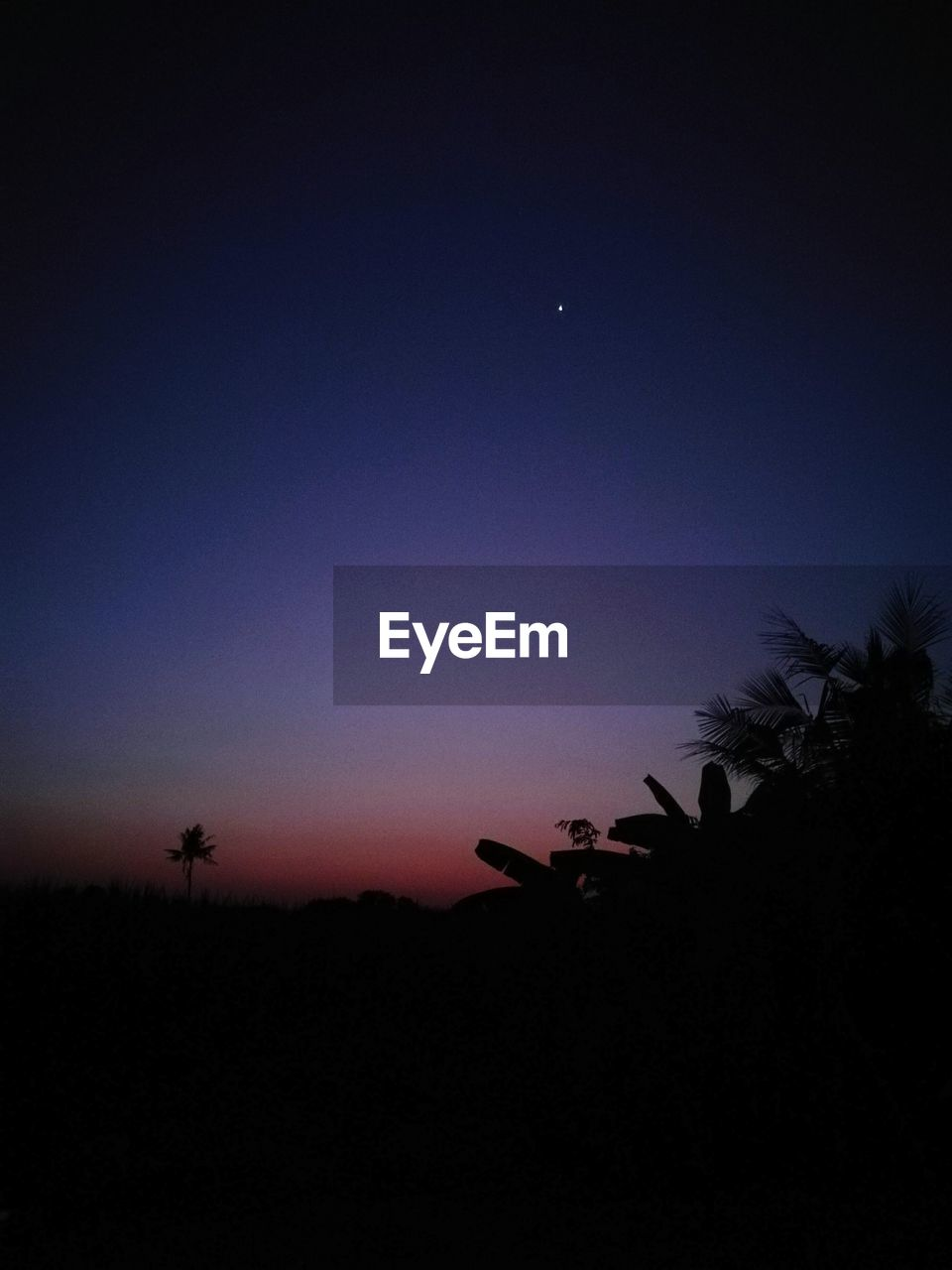 silhouette, nature, beauty in nature, tranquil scene, tree, tranquility, scenics, copy space, growth, night, no people, clear sky, outdoors, plant, blue, sky, sunset, moon, landscape