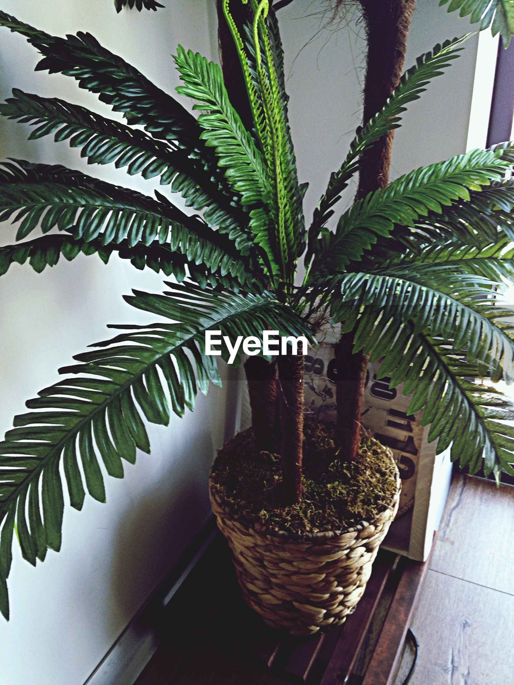 potted plant, leaf, palm tree, growth, low angle view, built structure, indoors, architecture, plant, building exterior, house, tree, no people, window, day, sunlight, table, sky, nature, balcony