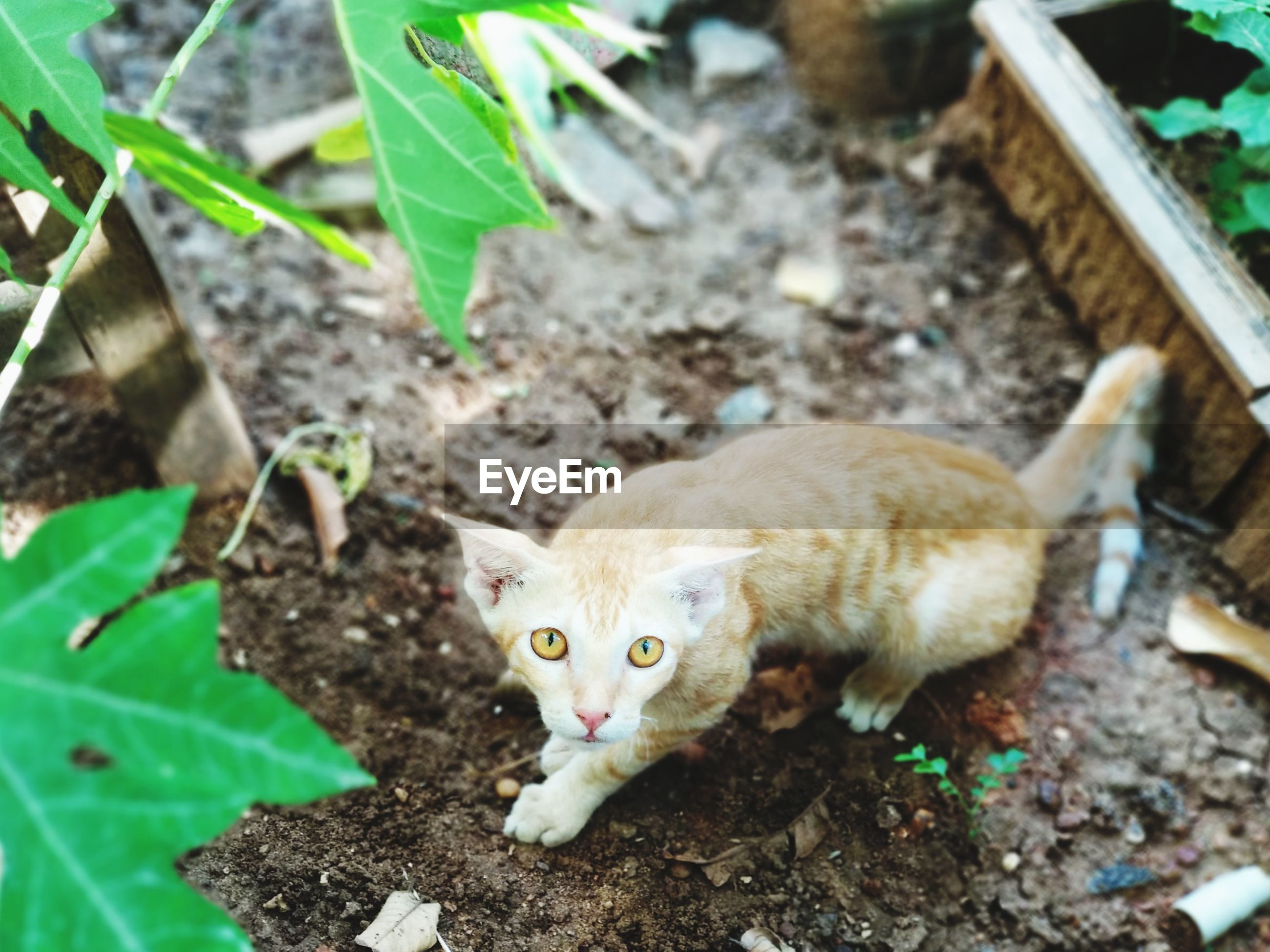 HIGH ANGLE VIEW OF A CAT ON FIELD