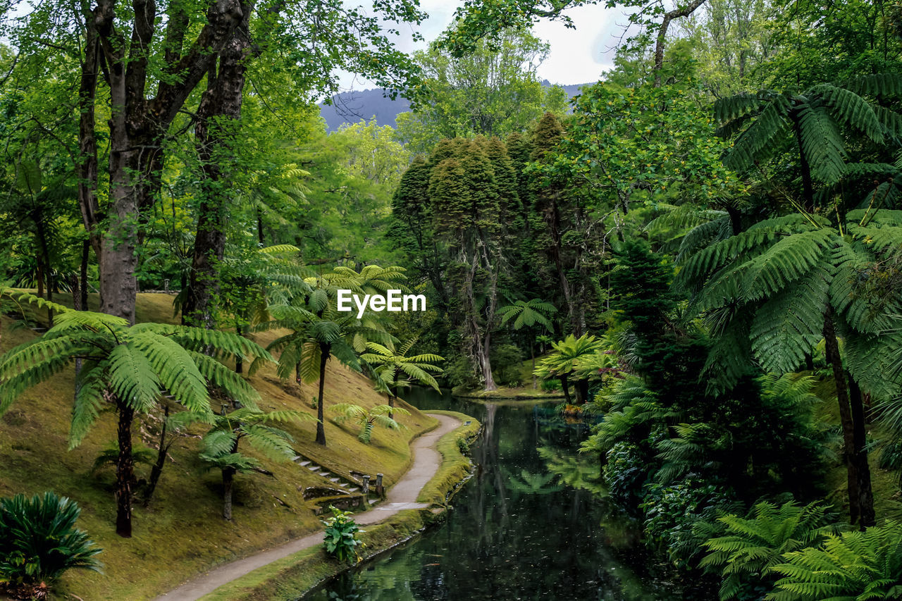 plant, tree, green color, growth, forest, beauty in nature, nature, land, foliage, tranquility, lush foliage, tranquil scene, no people, scenics - nature, environment, day, non-urban scene, water, outdoors, landscape, woodland, rainforest
