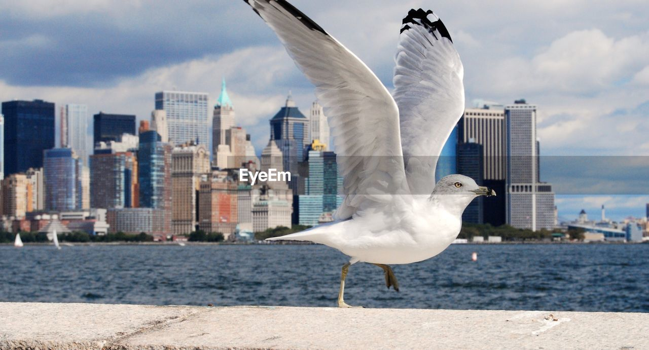 bird, animals in the wild, animal themes, animal, animal wildlife, vertebrate, water, building exterior, seagull, architecture, built structure, city, spread wings, sky, flying, cloud - sky, nature, day, one animal, no people, outdoors, cityscape, office building exterior, skyscraper
