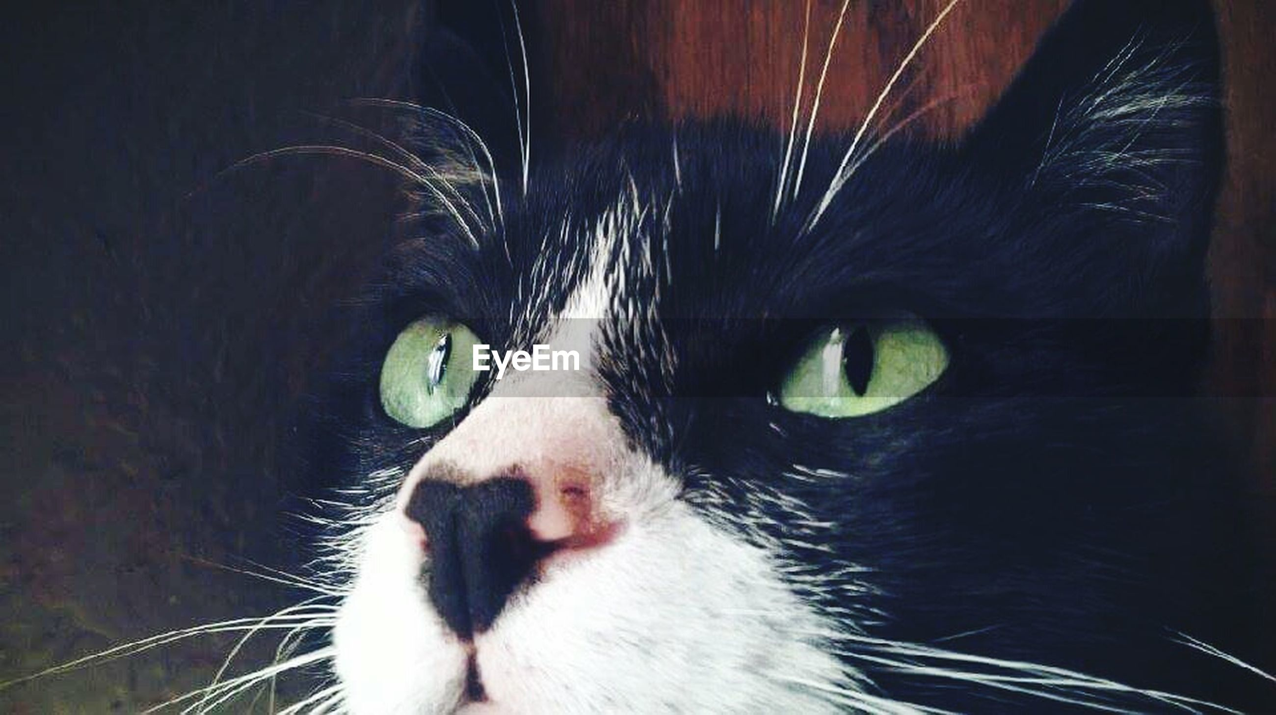 one animal, animal themes, pets, domestic animals, domestic cat, mammal, animal eye, animal head, close-up, animal body part, cat, whisker, portrait, looking at camera, feline, animal hair, staring, part of, indoors, zoology