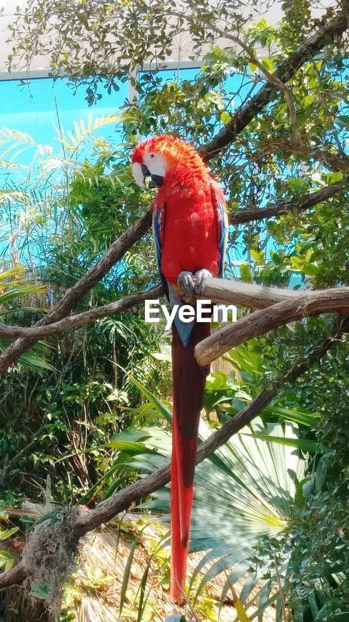 tree, vertebrate, animal wildlife, red, bird, plant, animal themes, animals in the wild, parrot, animal, perching, one animal, branch, scarlet macaw, day, macaw, no people, nature, outdoors, full length
