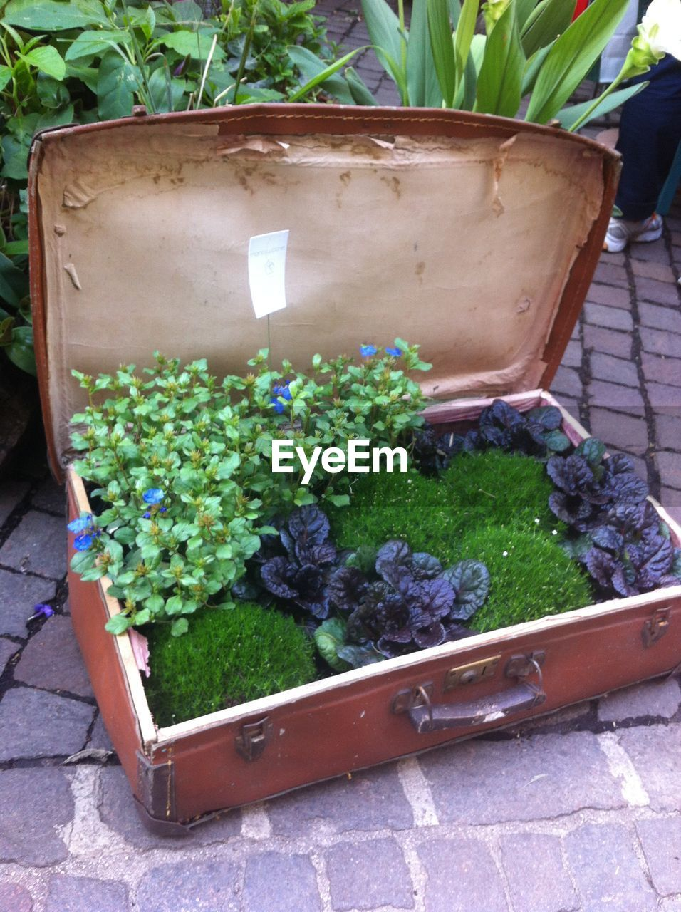 High Angle View Of Plants Growing In Suitcase On Footpath