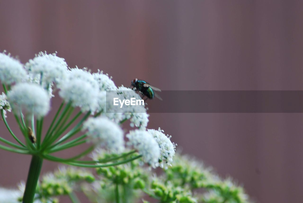 plant, animal wildlife, animals in the wild, animal themes, animal, beauty in nature, flower, flowering plant, one animal, close-up, invertebrate, growth, insect, selective focus, fragility, vulnerability, nature, day, no people, freshness, flower head, outdoors, pollination, small