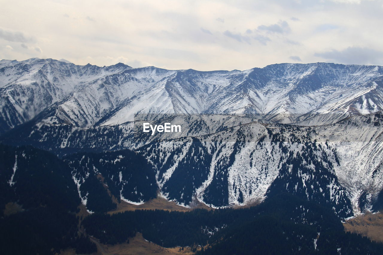 Top view of the mountain range with coniferous forest covered with snow, aerial photography