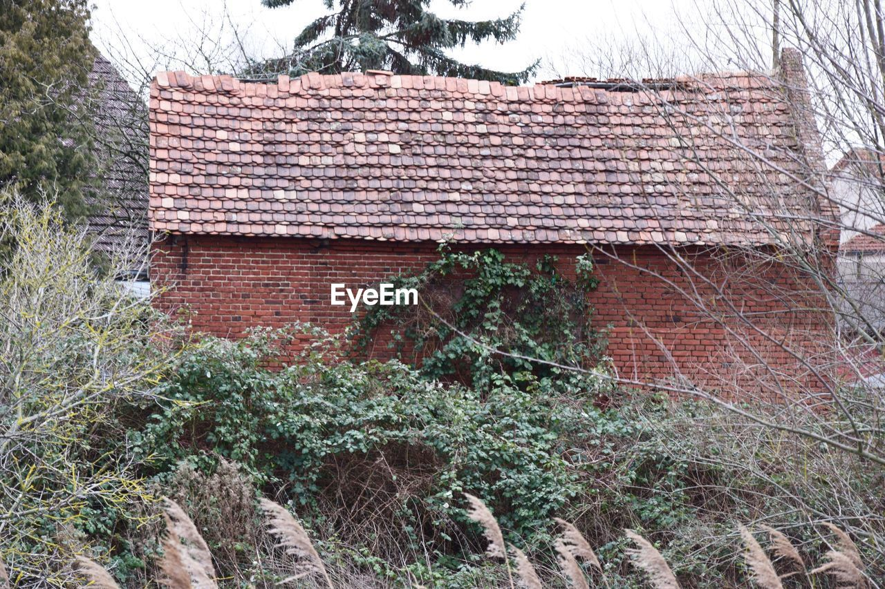 built structure, architecture, building exterior, plant, roof, house, building, day, tree, nature, no people, growth, outdoors, brick wall, roof tile, brick, ivy, abandoned, old, residential district, deterioration