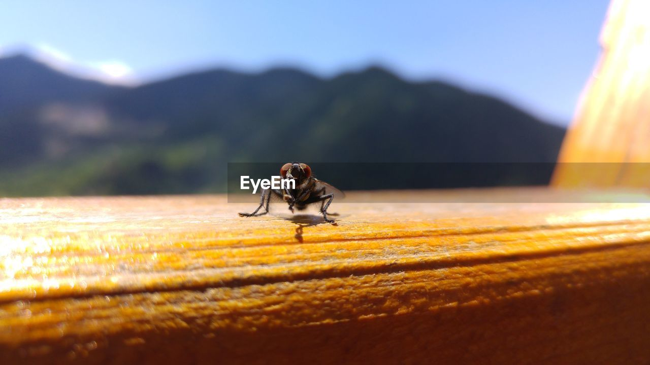 one animal, selective focus, animal, nature, insect, invertebrate, mountain, animal themes, sunlight, day, animal wildlife, animals in the wild, no people, beauty in nature, outdoors, sky, close-up, plant, zoology