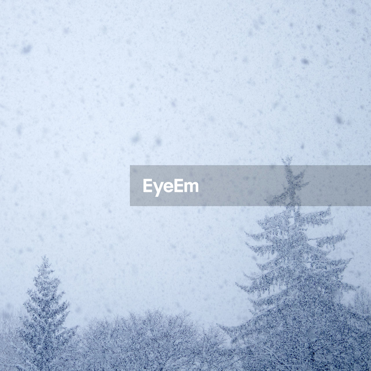 snow, winter, cold temperature, snowflake, snowing, weather, frozen, nature, backgrounds, blizzard, frost, christmas, ice crystal, ice, tree, no people, spruce tree, outdoors, day, tranquil scene, forest, fir tree, beauty in nature, scenics, landscape, sky, frozen water, snowdrift, freshness, close-up