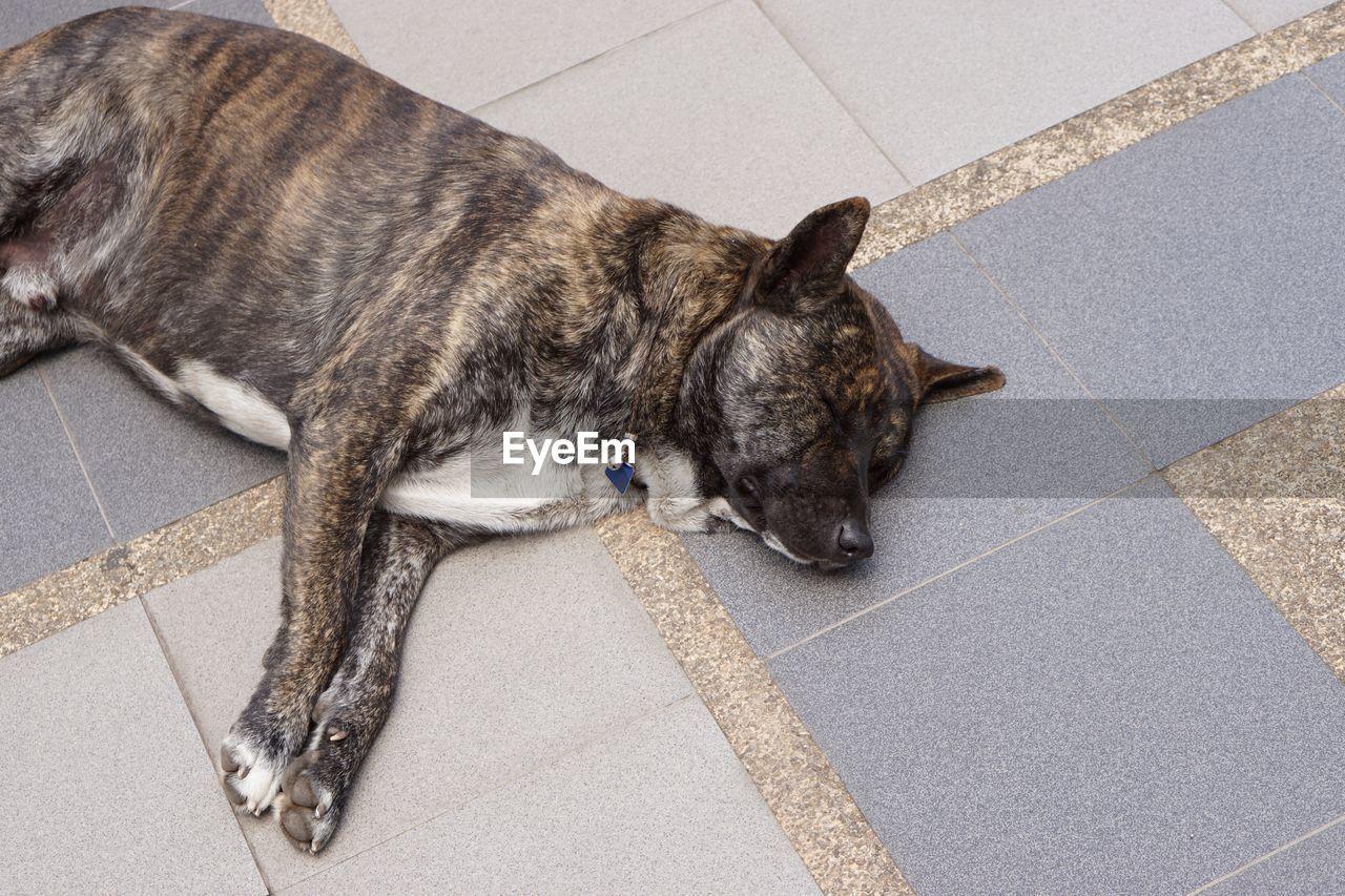HIGH ANGLE VIEW OF DOG SLEEPING ON TILED FLOOR