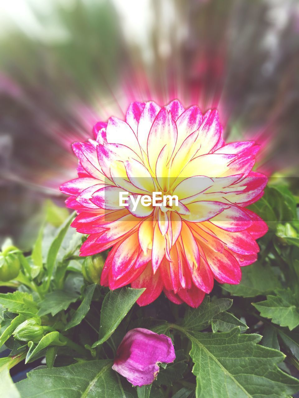 flower, petal, nature, beauty in nature, fragility, freshness, growth, flower head, plant, blooming, yellow, no people, leaf, outdoors, close-up, day