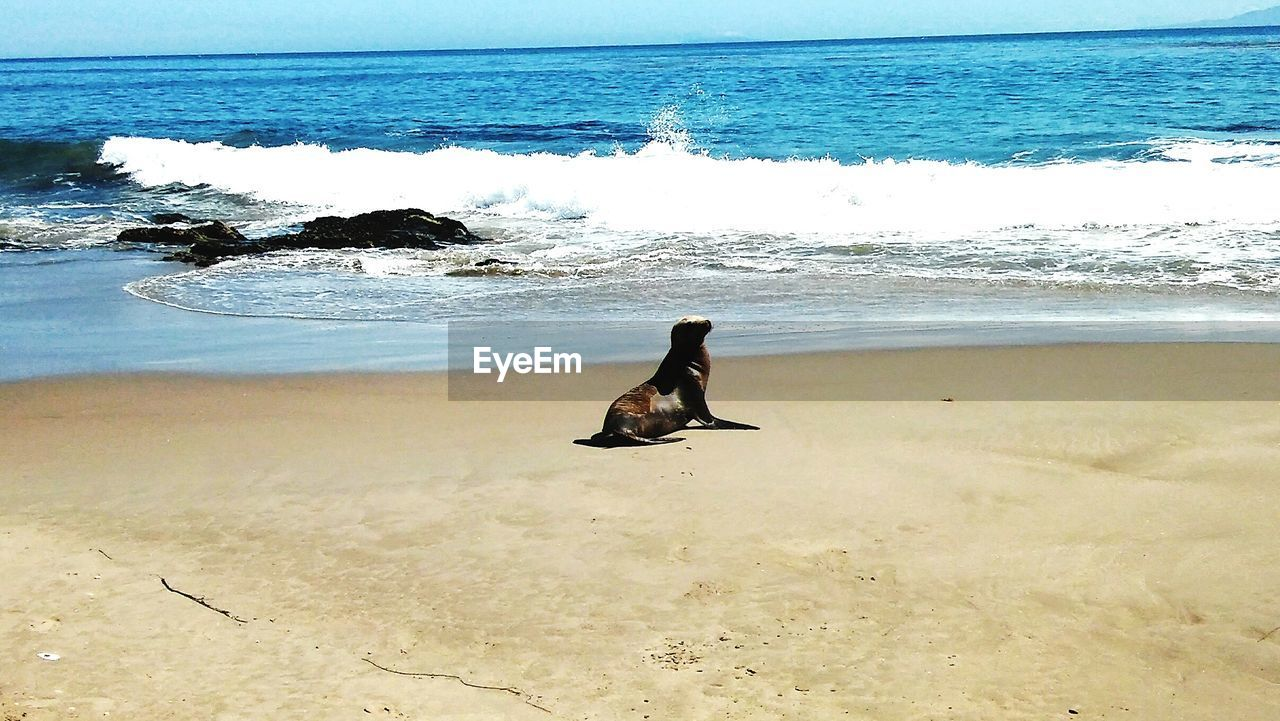 Seal On Shore Against Sky
