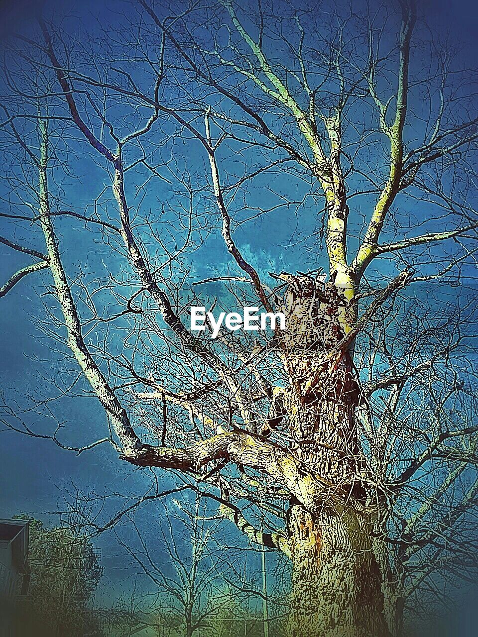 tree, low angle view, blue, growth, outdoors, branch, no people, nature, day, bare tree, beauty in nature, sky, clear sky, close-up