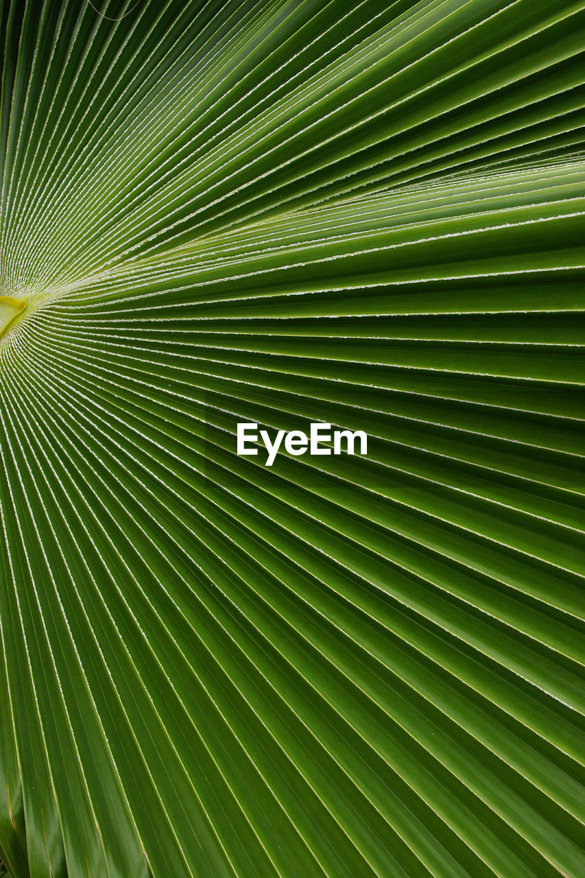 leaf, backgrounds, palm tree, palm leaf, green color, nature, growth, frond, full frame, close-up, textured, no people, day, freshness, outdoors, tree, beauty in nature, fragility