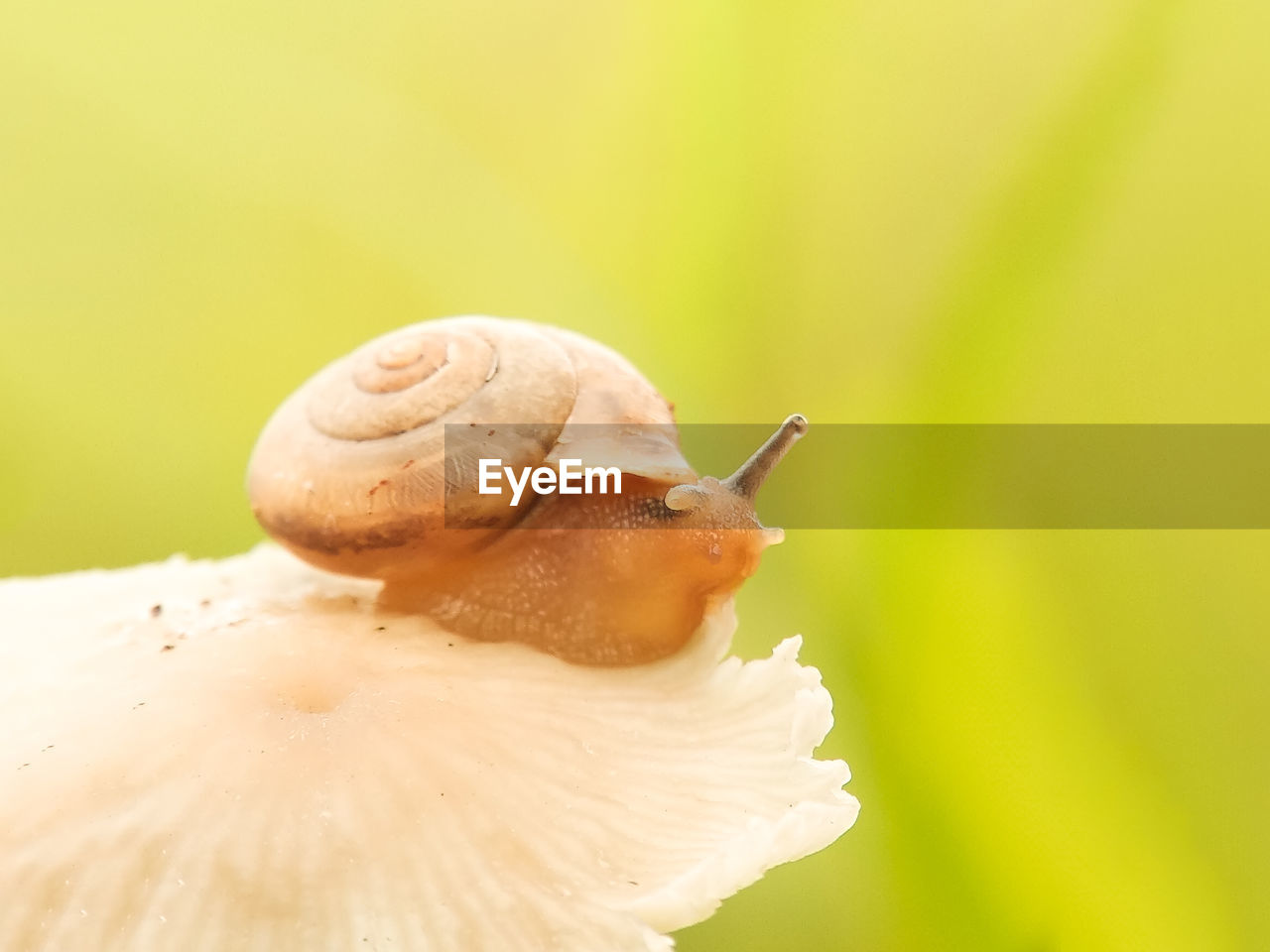 close-up, animal wildlife, mollusk, gastropod, focus on foreground, invertebrate, snail, animal themes, animals in the wild, animal, one animal, no people, fragility, vulnerability, selective focus, shell, nature, animal antenna, freshness, plant