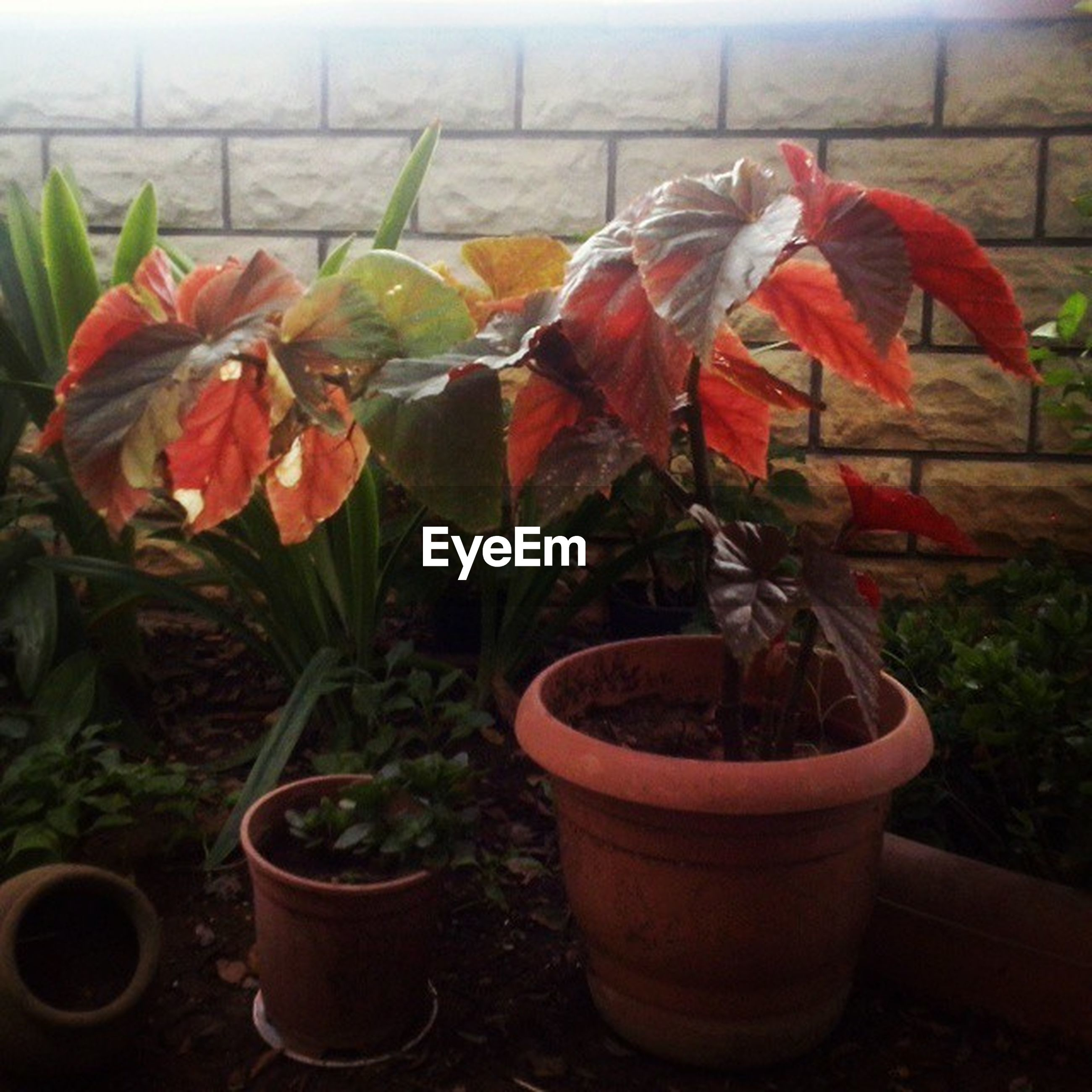 plant, potted plant, flower, growth, leaf, wall - building feature, fragility, red, freshness, flower pot, close-up, nature, day, no people, front or back yard, indoors, growing, wall, variation