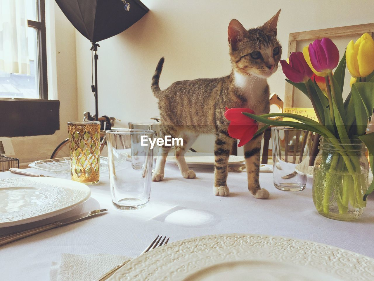 Kitten Standing On Table At Home