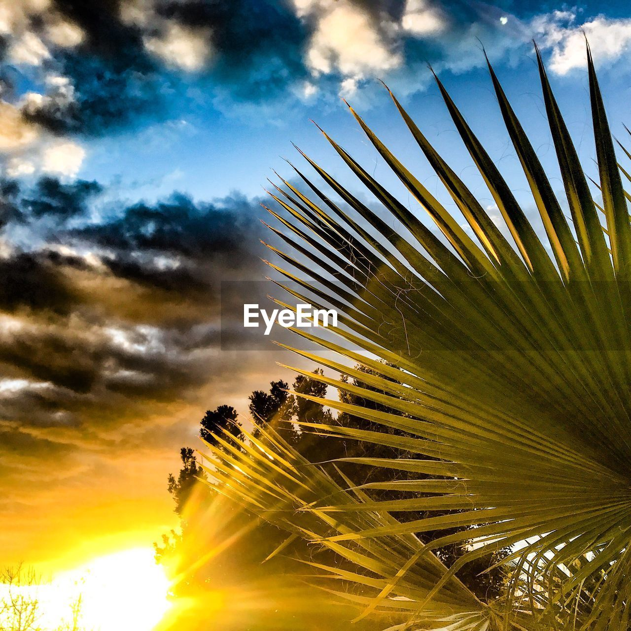 sky, palm tree, nature, cloud - sky, tree, no people, beauty in nature, outdoors, sunset, growth, low angle view, close-up, day, city