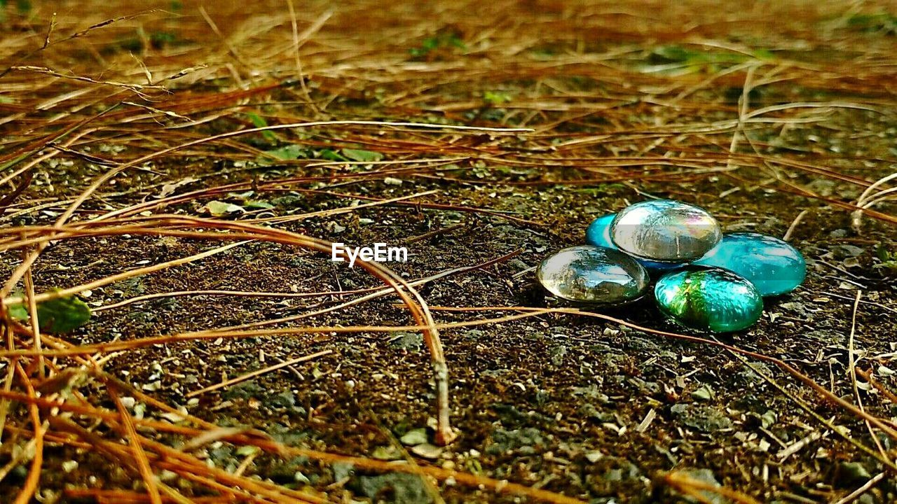 jewelry, no people, close-up, day, outdoors, nature, grass, animal themes