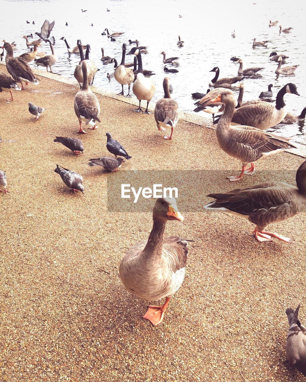 High Angle View Of Birds On Lake