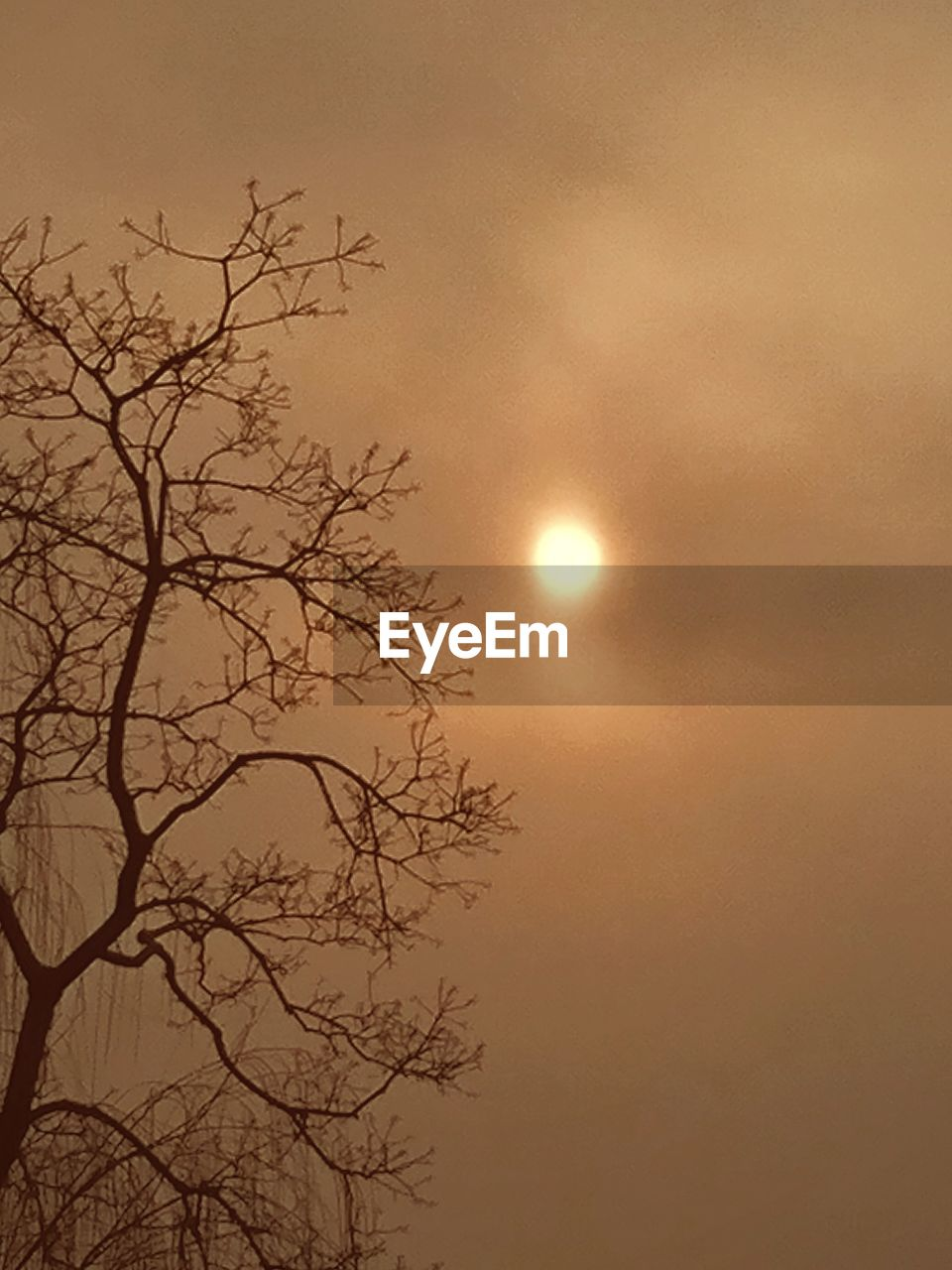 nature, sunset, sun, beauty in nature, sky, outdoors, tranquility, tree, low angle view, bare tree, no people, branch, tranquil scene, scenics, moon, day