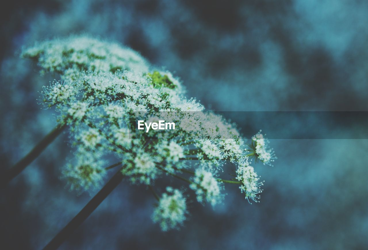 plant, growth, beauty in nature, nature, no people, day, close-up, cold temperature, focus on foreground, green color, selective focus, tranquility, leaf, freshness, plant part, tree, snow, outdoors, winter