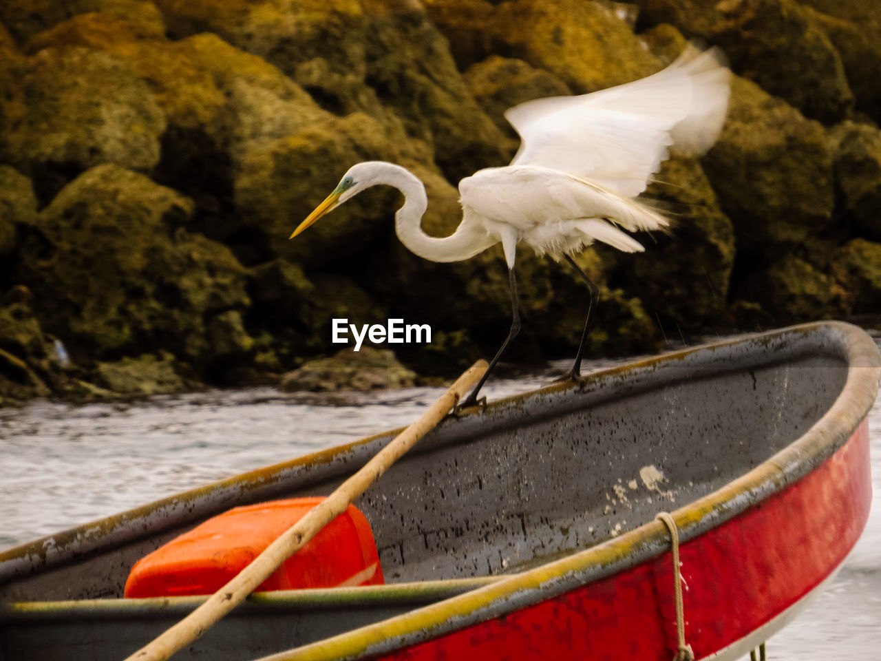 animals in the wild, animal wildlife, animal, animal themes, bird, vertebrate, water, one animal, no people, white color, egret, nature, day, focus on foreground, nautical vessel, close-up, great egret, outdoors, beak, seagull