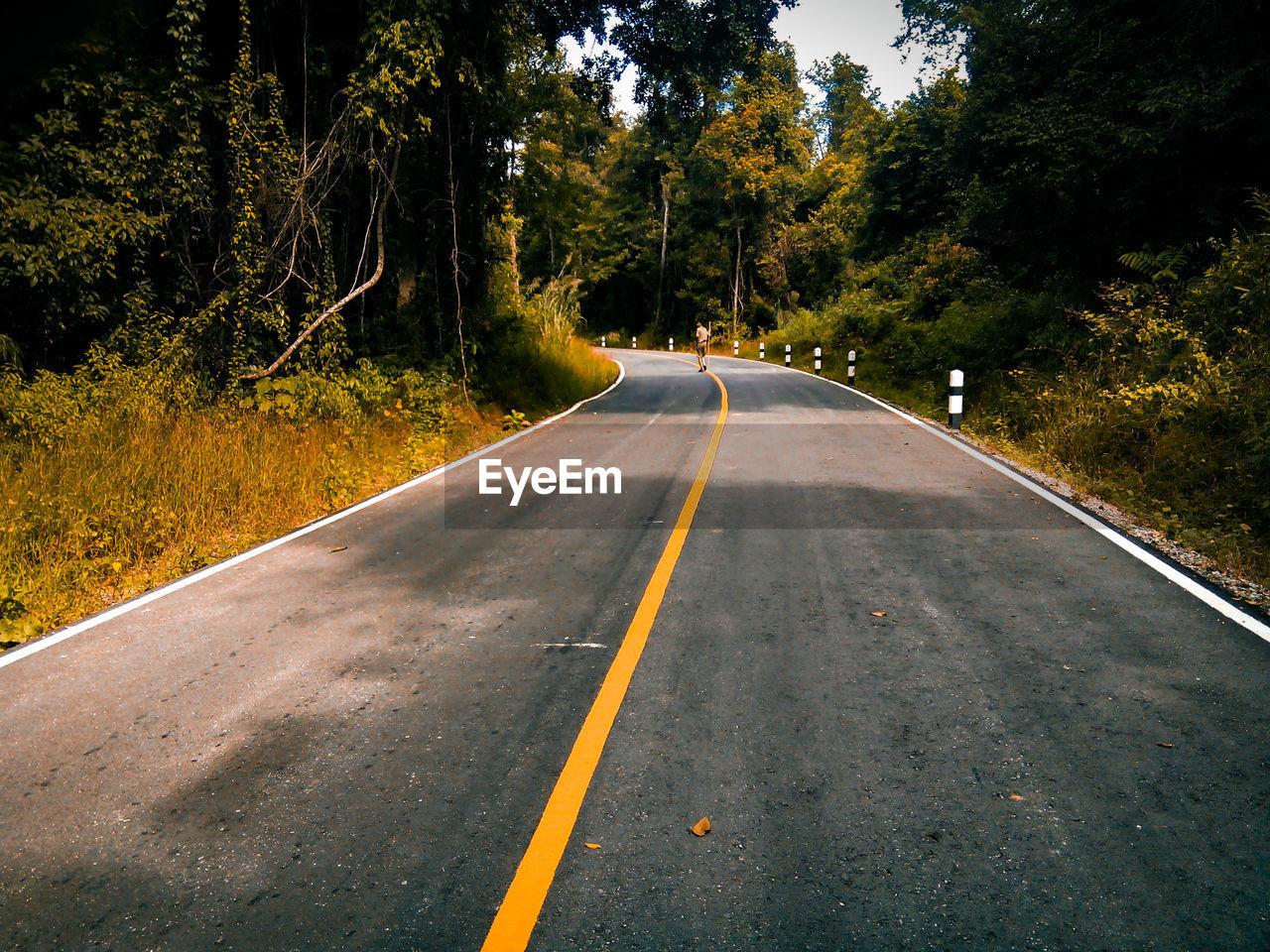 tree, the way forward, direction, plant, symbol, marking, sign, road marking, transportation, road, nature, no people, day, diminishing perspective, double yellow line, asphalt, forest, empty road, tranquility, land, outdoors, dividing line, long