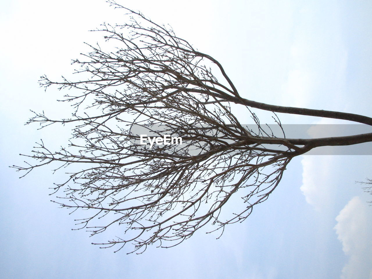 sky, nature, no people, day, outdoors, beauty in nature, low angle view, tree, close-up, freshness