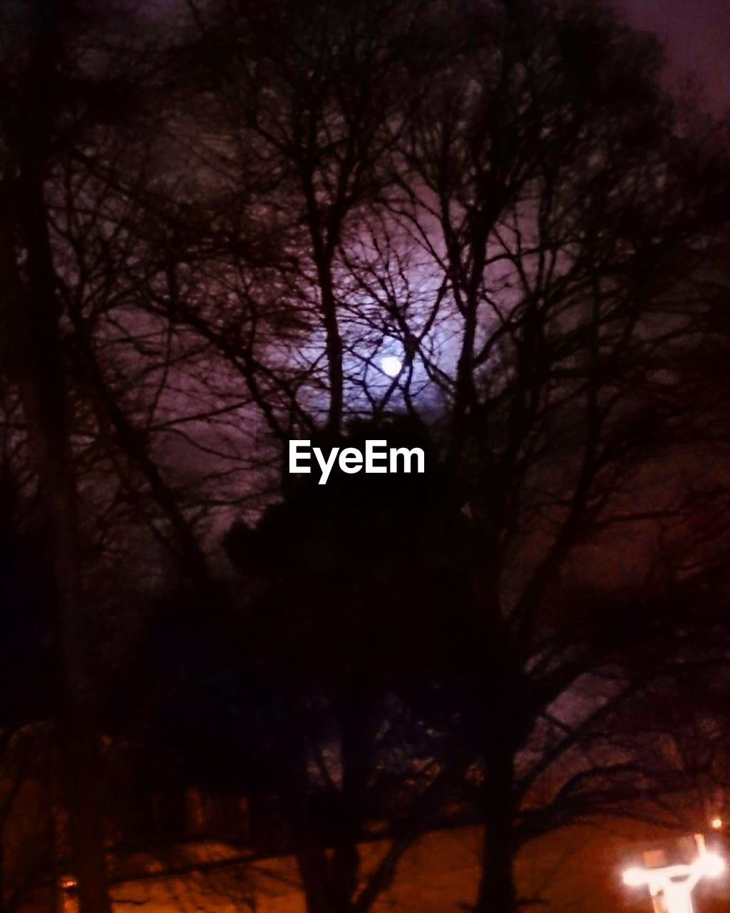tree, bare tree, tranquility, night, nature, outdoors, beauty in nature, branch, no people, forest, low angle view, scenics, moon, sky, astronomy