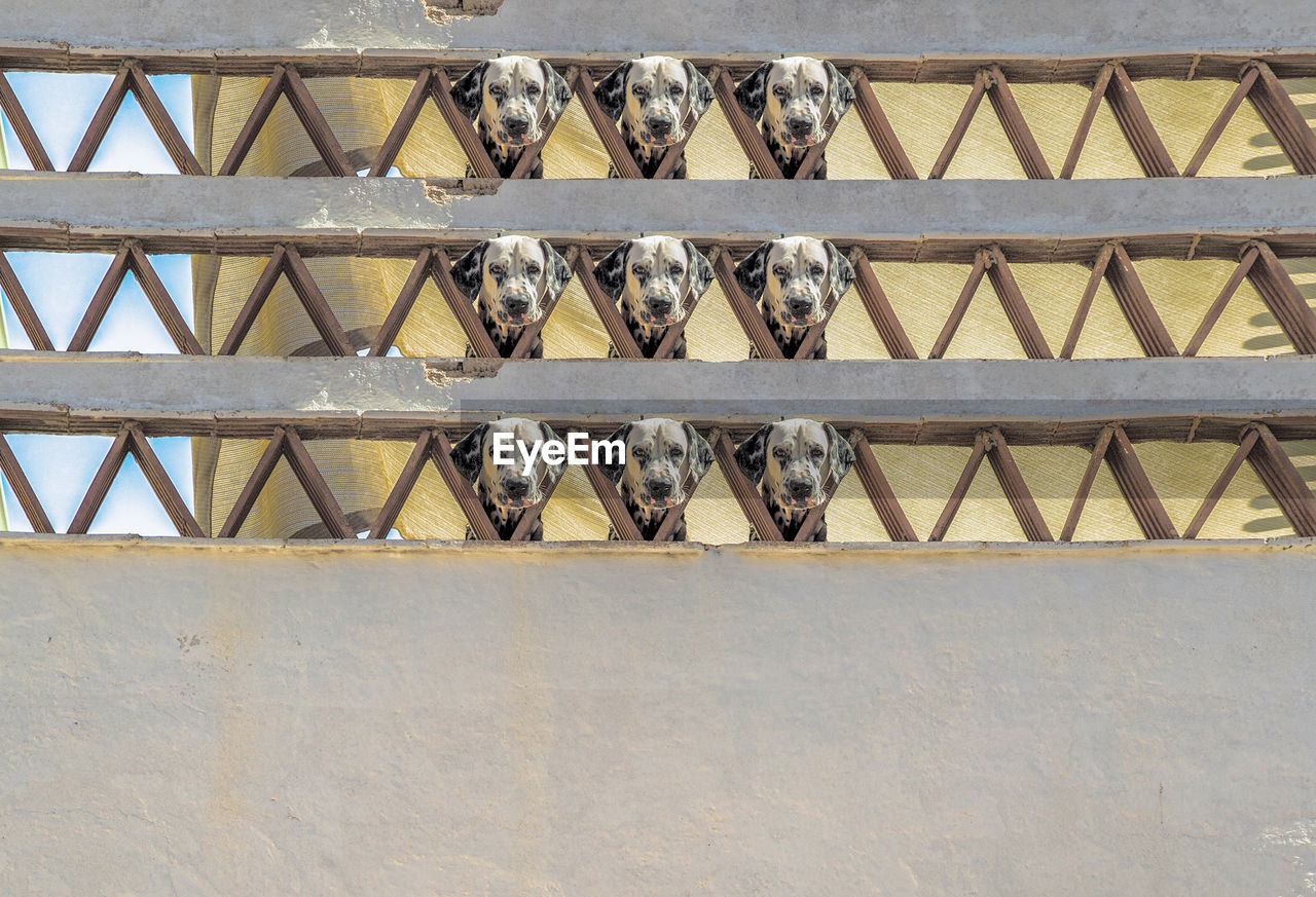Digital Composite Image Of Puppy Seen Through Fence