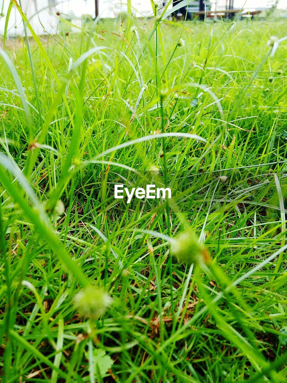 grass, green color, growth, field, nature, day, outdoors, plant, no people, close-up, beauty in nature, freshness