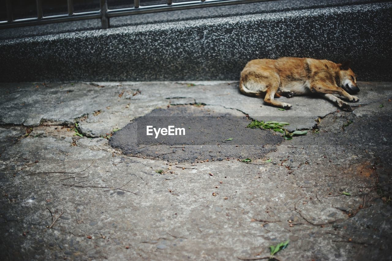 mammal, animal themes, animal, one animal, domestic, vertebrate, domestic animals, pets, no people, day, cat, feline, full length, domestic cat, animal wildlife, city, road, footpath, high angle view, outdoors