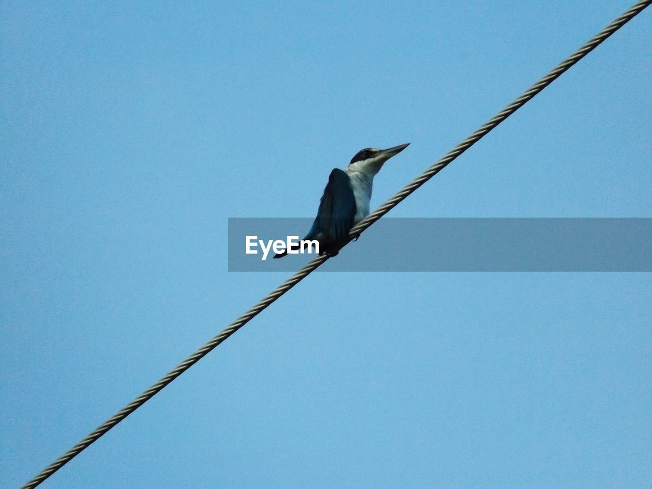Low Angle View Of Crow Perching On Rope Against Clear Blue Sky